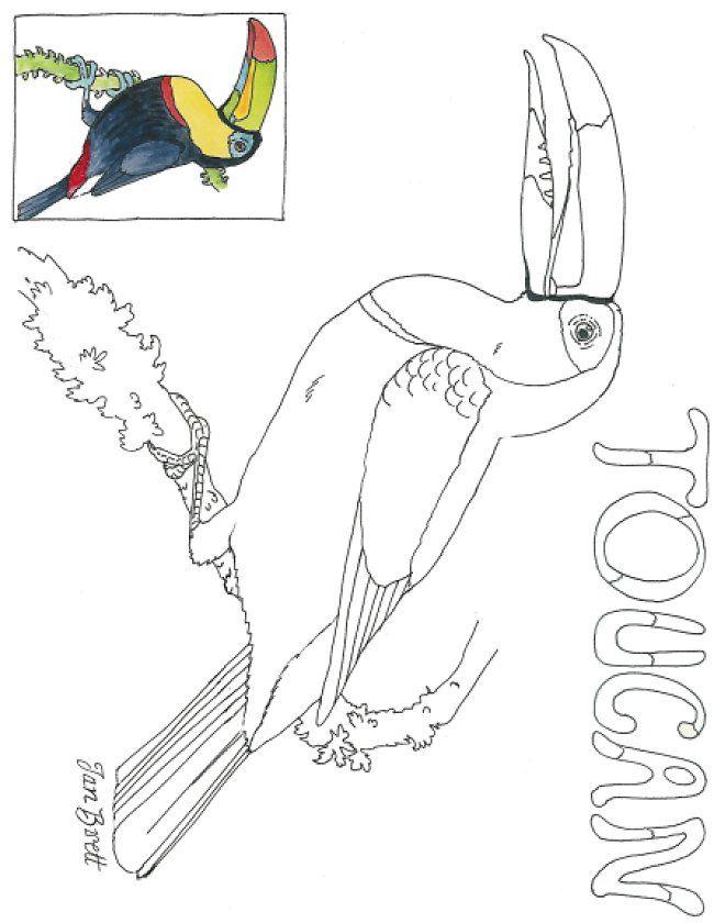 Cloud Forest Toucan Coloring Page Desenhos Rabiscos Quadro