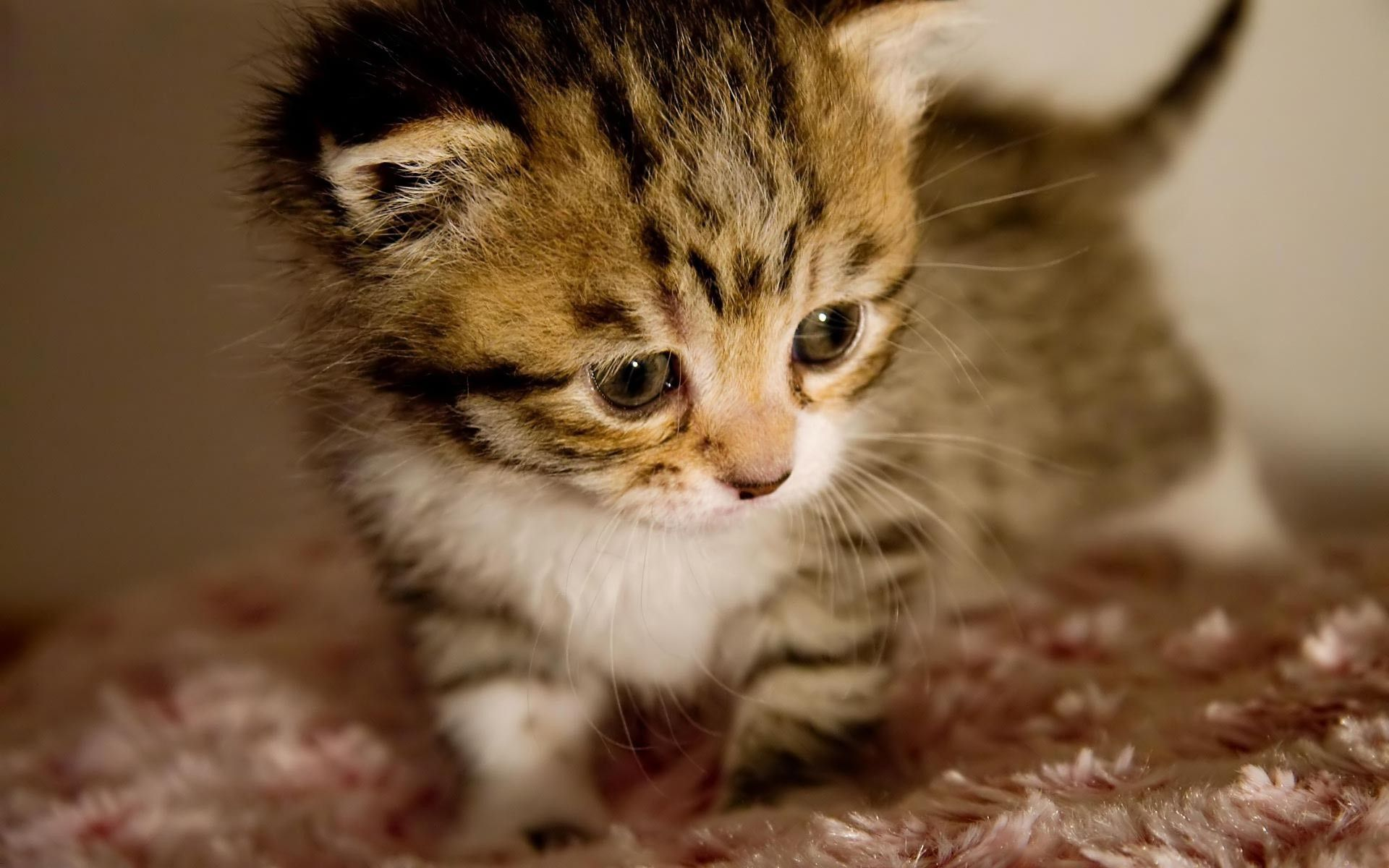 Cute Baby Kittens pictures Cute Baby Kittens Ztmwnzk