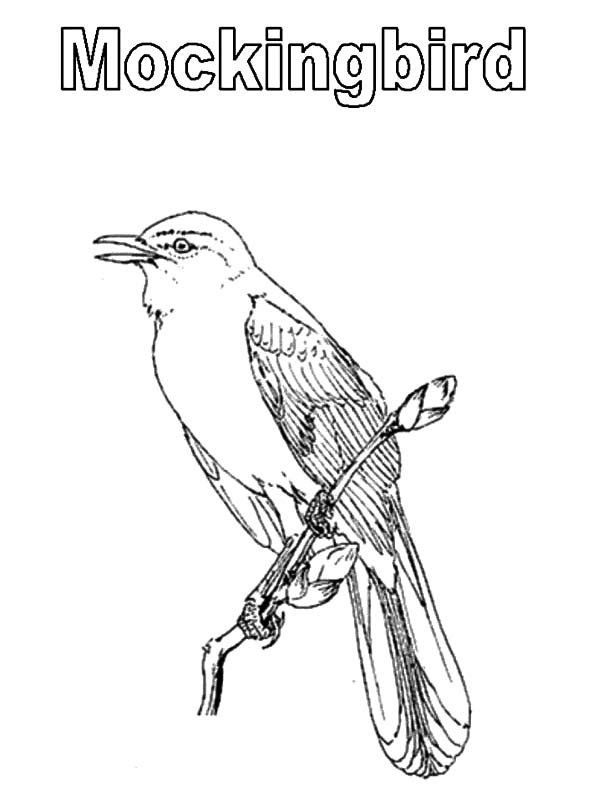 Mockingbird Coloring Pages Drawing Coloring Coloring Pages