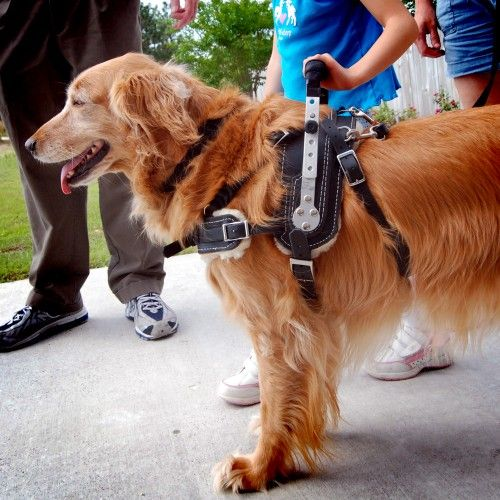 Mobility Support Harness For Brace And Balance Stability