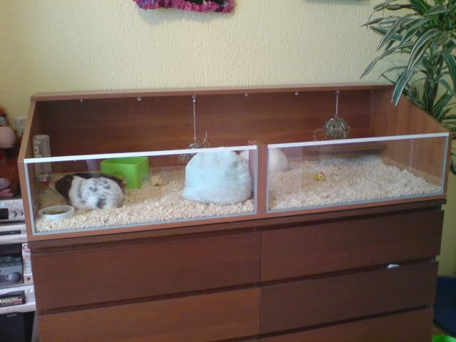 Awesome ideas for guinea pig hutch and cages homemade for Diy guinea pig hutch