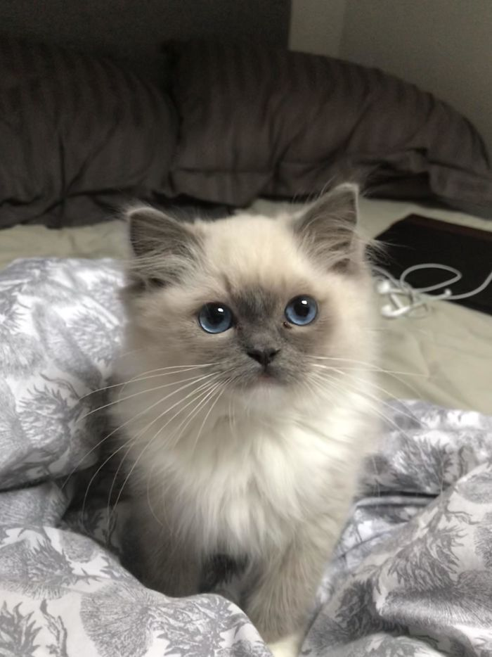 30 Mal haben uns Katzen verrückt gemacht Kittens cutest