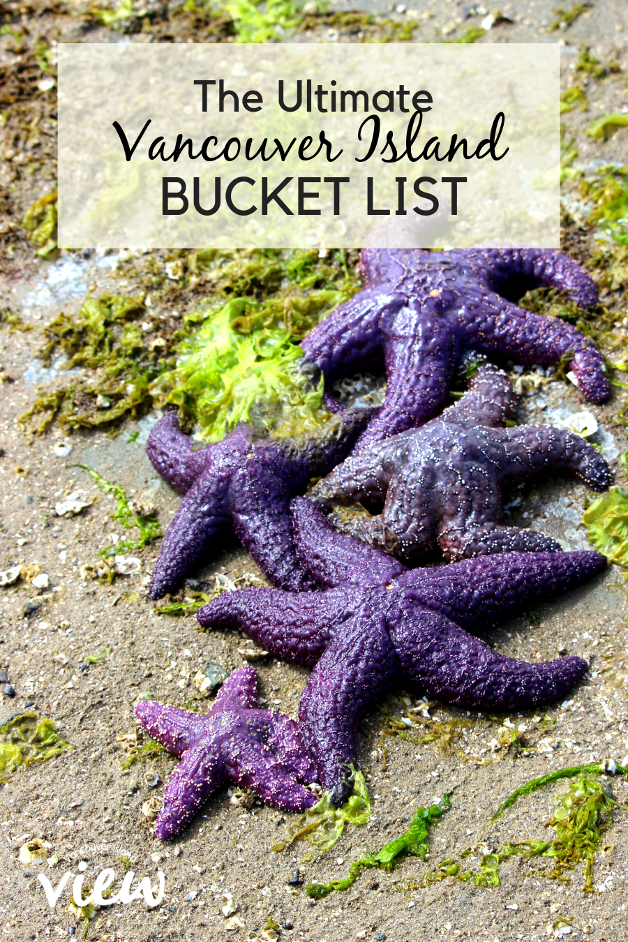 For the best things to see and do on Vancouver Island, check out this ultimate bucket list of ideas. Or use the list to create an epic Vancouver Island road trip. #vancouverisland #exploreBC #bucketlist #traveldestinations #trip