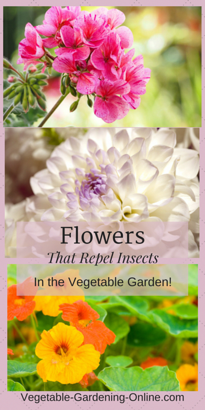 flowers as companion plants in raised bed vegetable