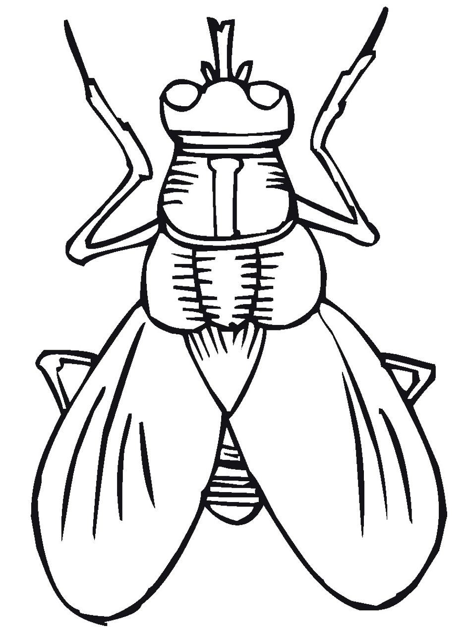 Flying Insect Coloring Pages To Print