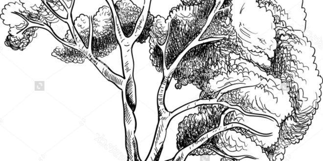 Sketsa Pohon Untuk Menggambar Mewarnai Warnagambarcom Andy
