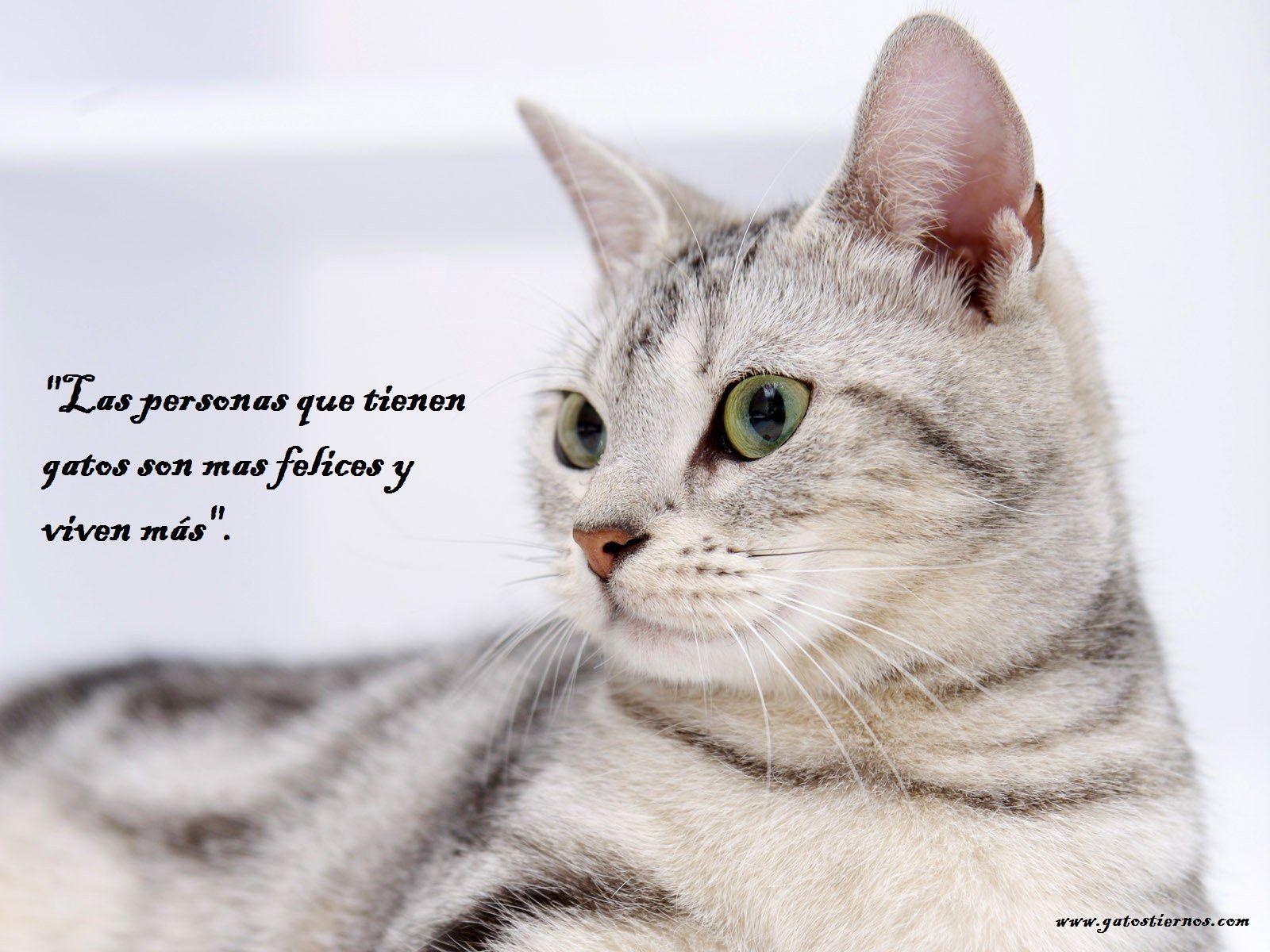 Mejores im genes de gatos tiernos en Pinterest