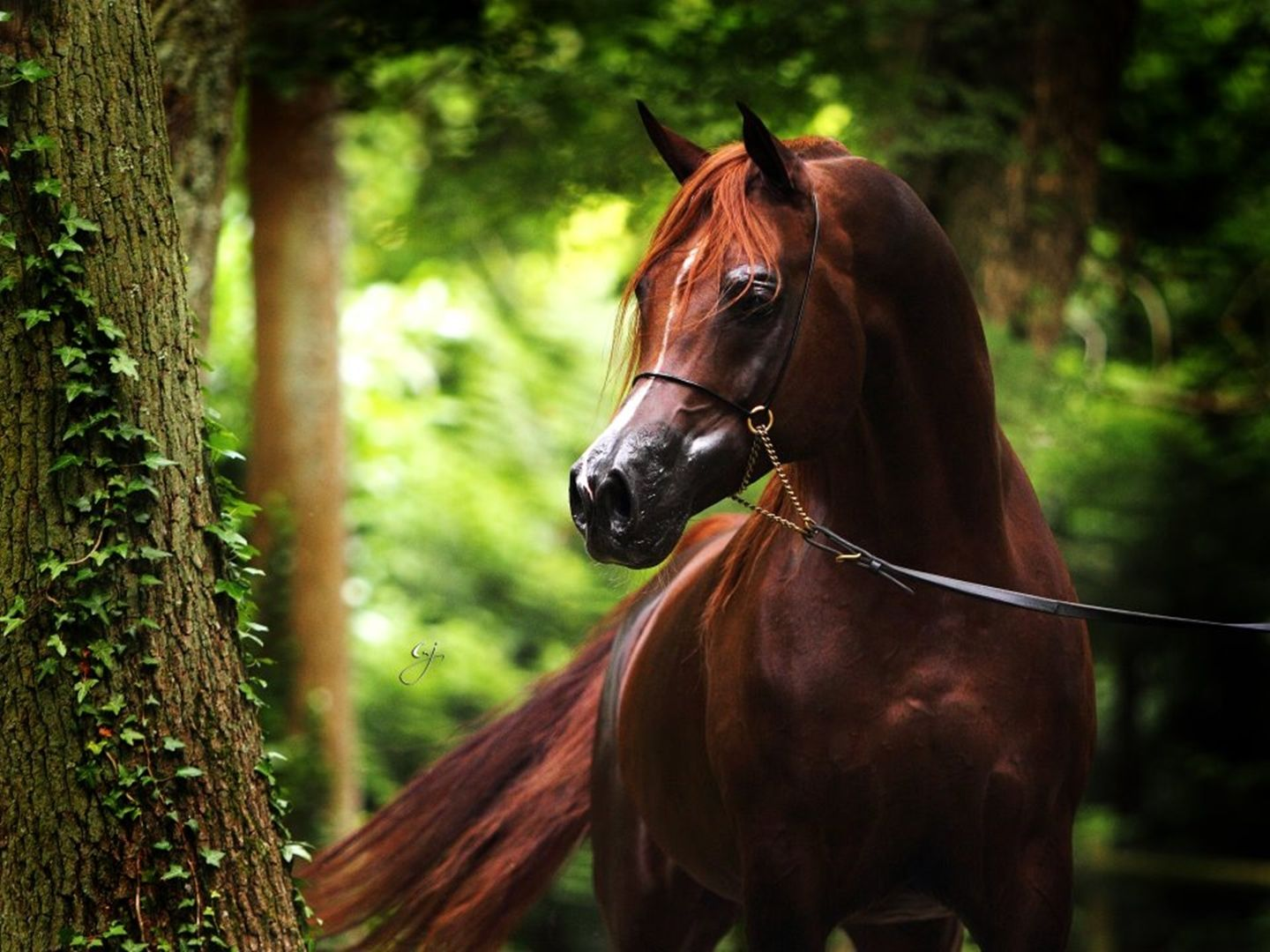Cool Wallpaper Horse Spring - 42ced647c3c428fc5e53be9201bf3332  You Should Have_854848.jpg