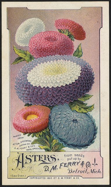 Pansies, from seeds put up by D. M. Ferry & Co., Detroit, Mich. (front) | Flickr - Photo Sharing!