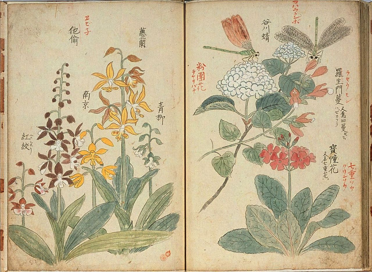 Heaveninawildflower Botanical Art Botanical Illustration Vintage Botanical Prints