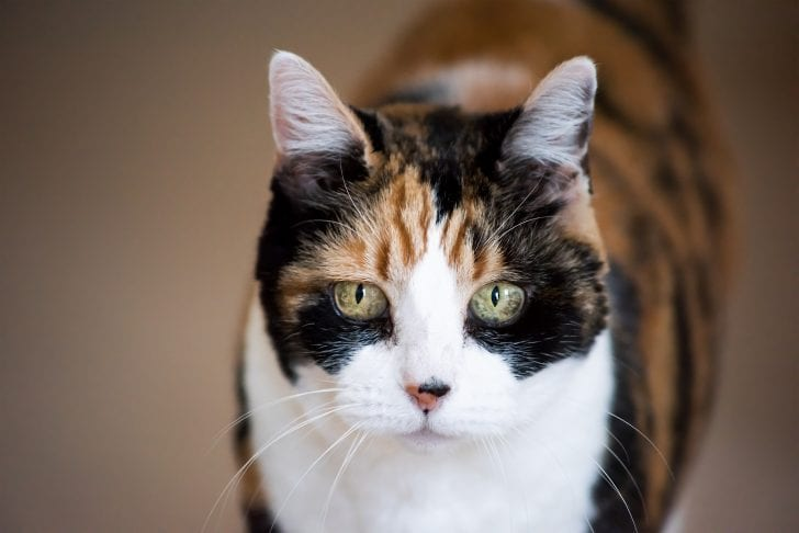 What Is Cat Dementia And What Are The Signs You Should