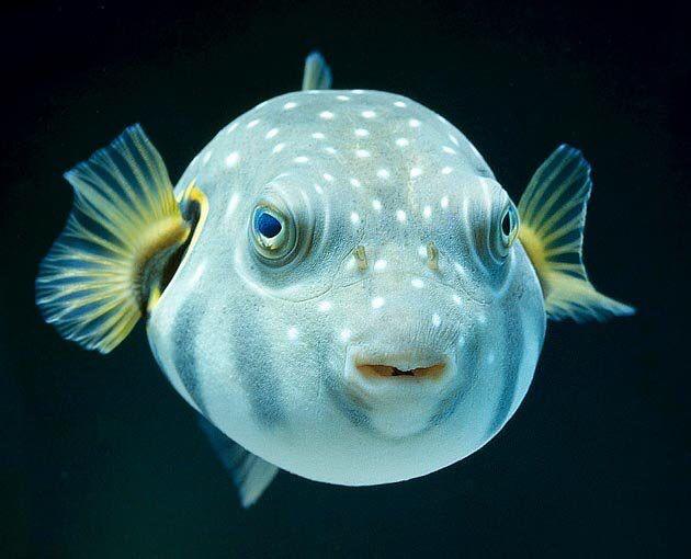 Portrait Beautiful Sea Creatures Ocean Creatures Sea Fish