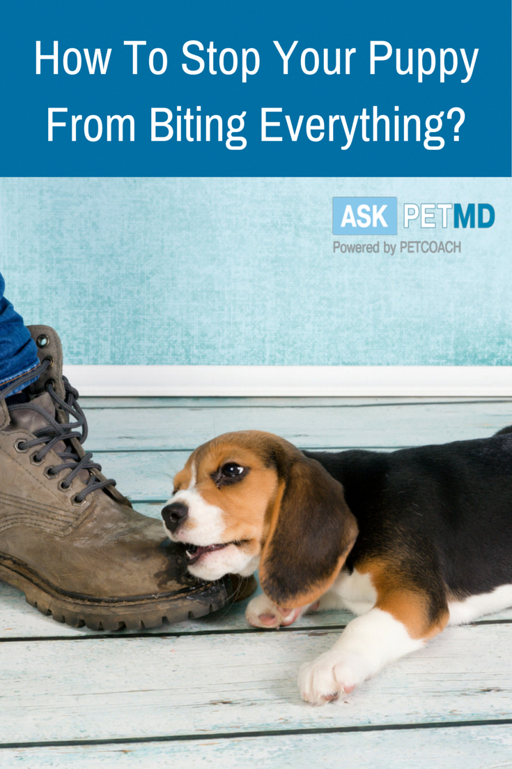 Elements to Remember When Potty Training Your Dog Puppy
