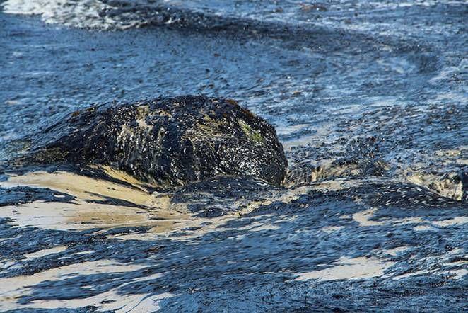 Treehugger Oil Spill Santa Barbara County Gallon Essay On Spills