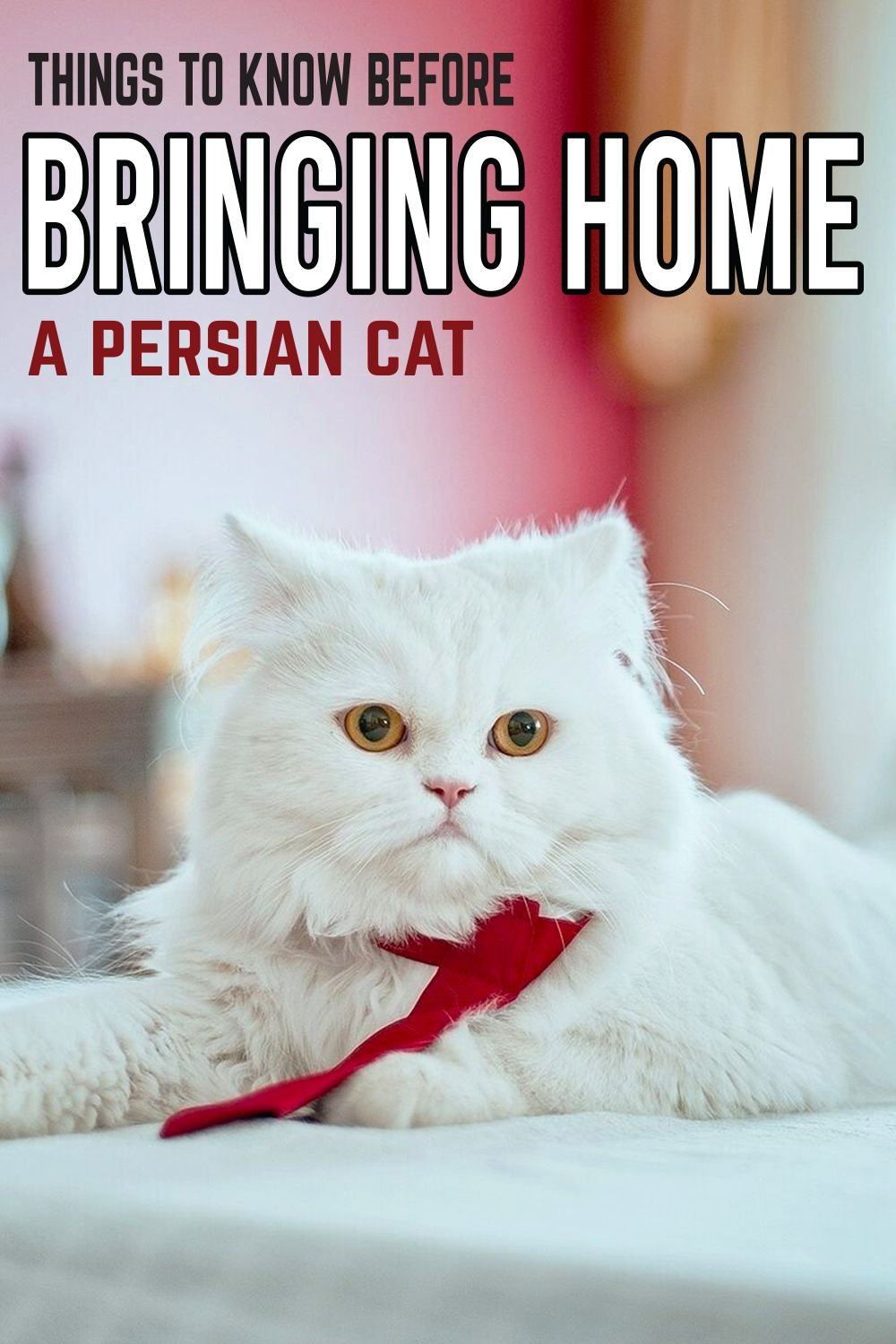 Things To Know Before Bringing Home a Persian Cat in 2020