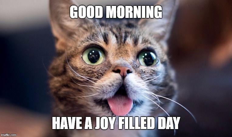 Lil Bub Cat Meme Generator Imgflip Cats Cat Memes Memes