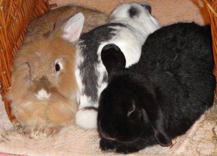 Kaninchen Kuscheln Gerne In Jeder Position Kaninchen Tiere Kuscheln