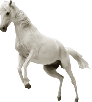 White Horse Png White Horse Transparent Background Png Image With Transparent Background Png Free Png Images White Horse Transparent Background Image