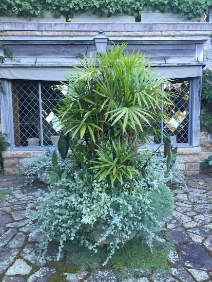 Image Result For Martha Stewart S Skylands Planters Martha