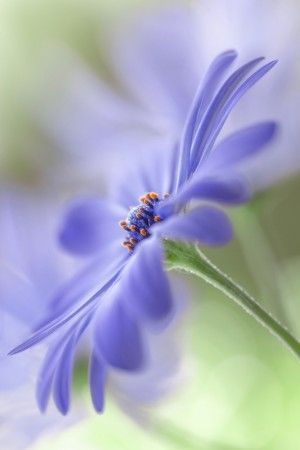 Blue paradise by Mandy Disher