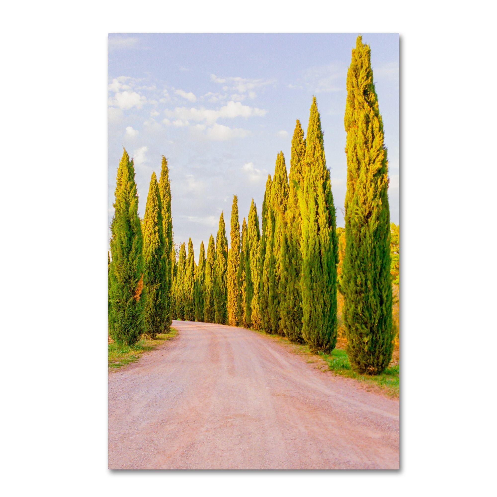 Ariane Moshayedi \'Italian Cypress Trees\' Canvas Art | Trees and ...