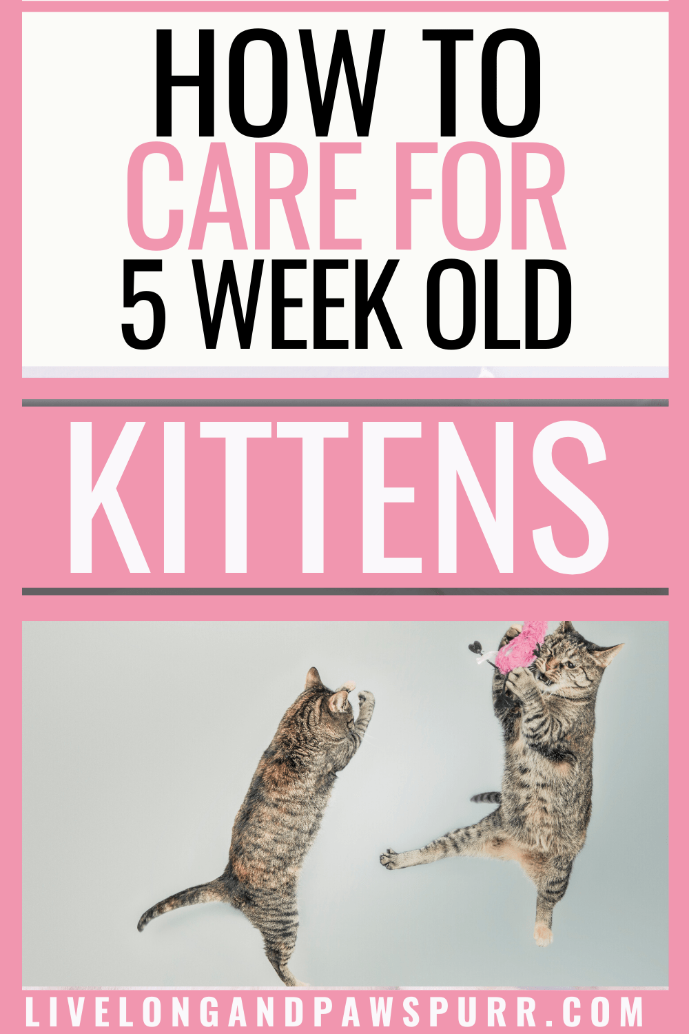 Everything You Need To Know About Five Week Old Kittens In 2020 Kitten Care Newborn Kittens Kittens