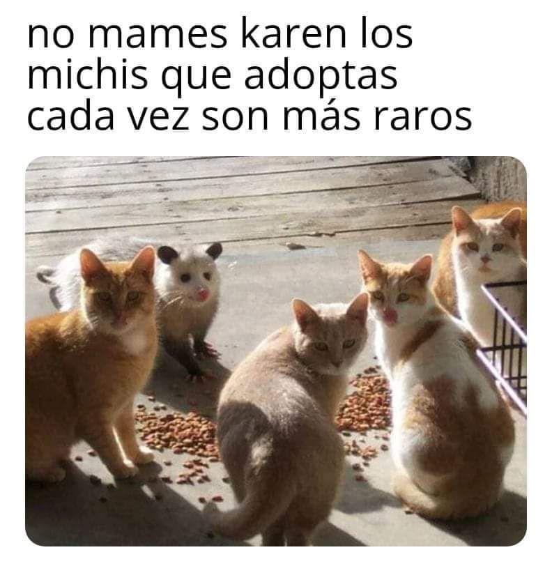 Memes De Karen Y Su Gato Segunda Parte Memes En Espanol La Mejor Recopilacion De Memes Lo Ma Memes De Animales Divertidos Memes Divertidos Meme Divertido