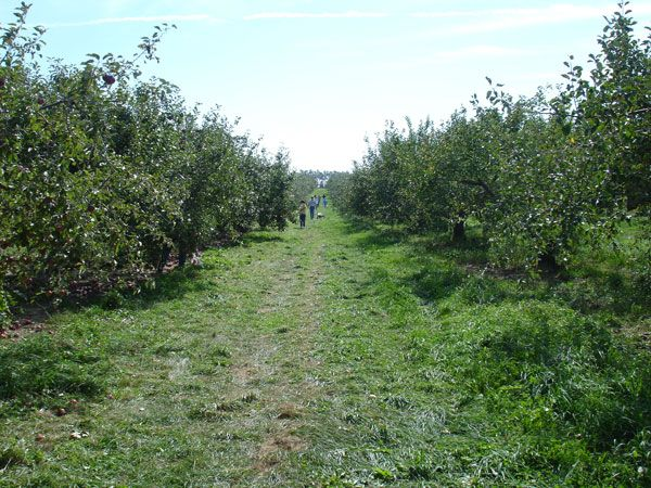 The Apple Barn Orchard and Winery in Elkhorn, Wis. | Apple ...