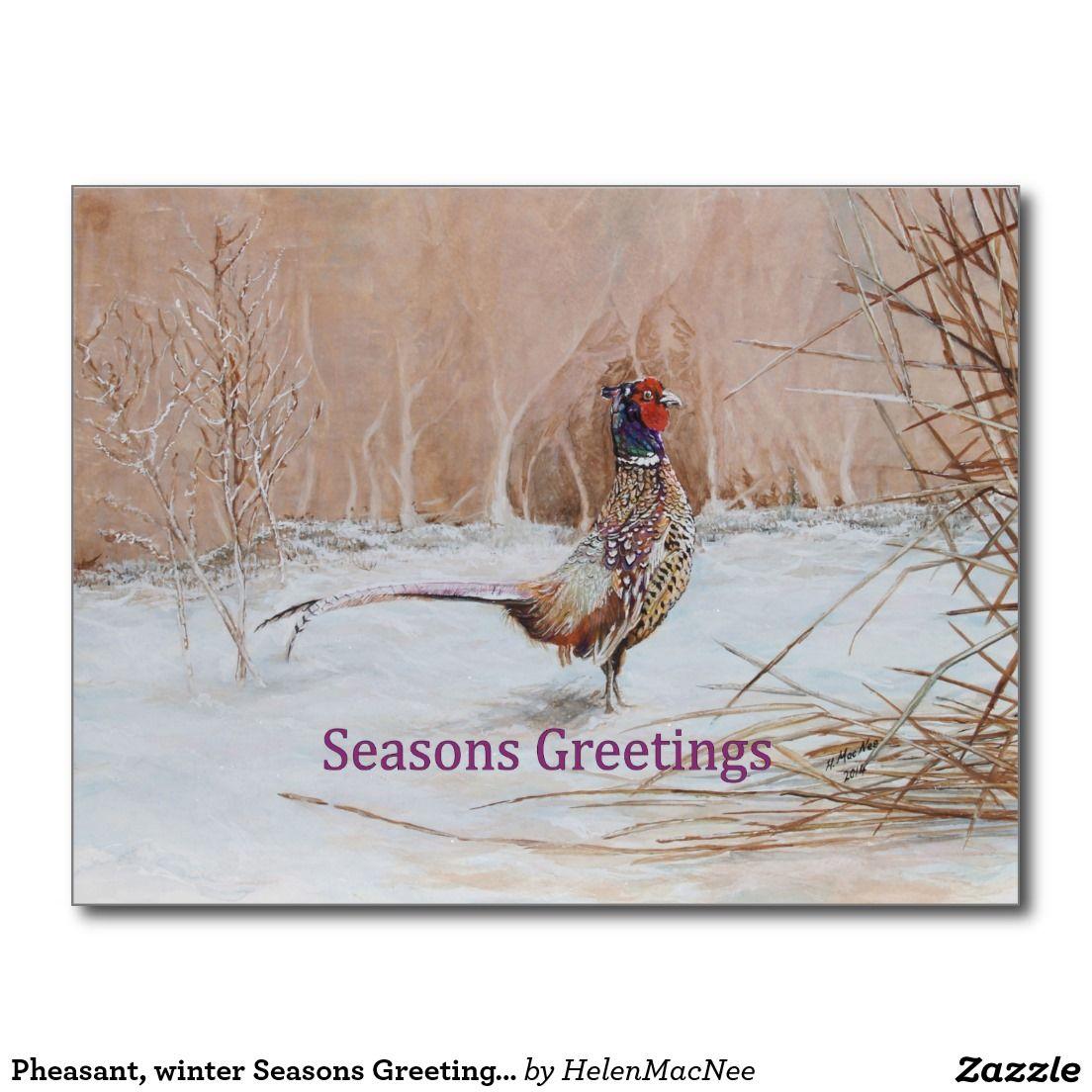 Pheasant, winter Seasons Greeting art Postcard
