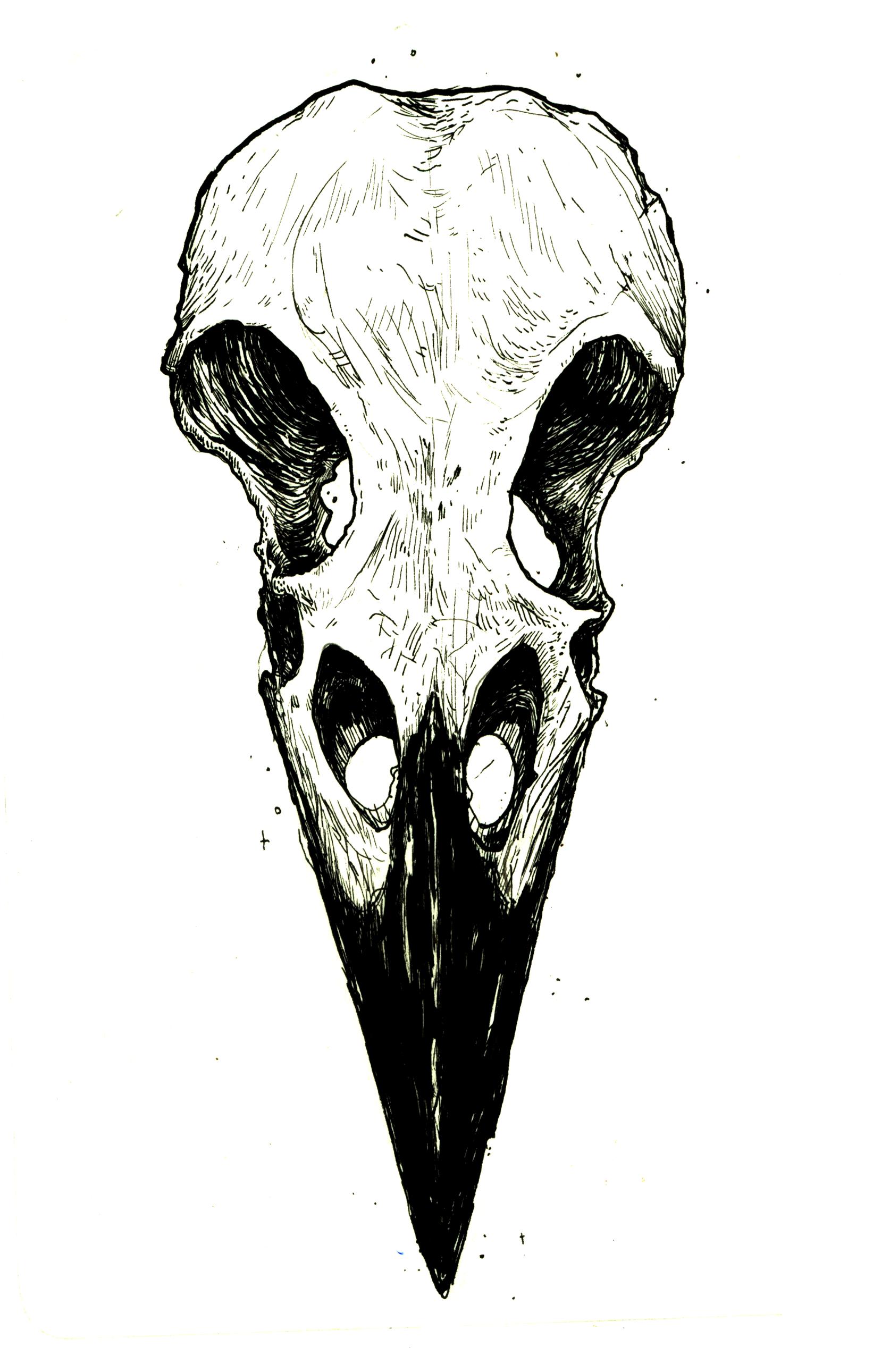 Ravenskullforrobin Png 1 642 2 581 Pixels Animal Skull Drawing Skulls Drawing Bird Skull Tattoo