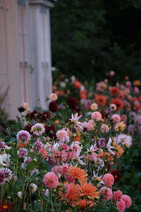 Photo of Møt den britiske blomsterdesigneren du trenger å følge på Instagram