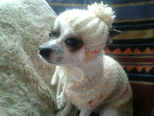 Hand knitted chihuahua dog beanie hat unique by Lillyloudesigns ... 4f767944d05