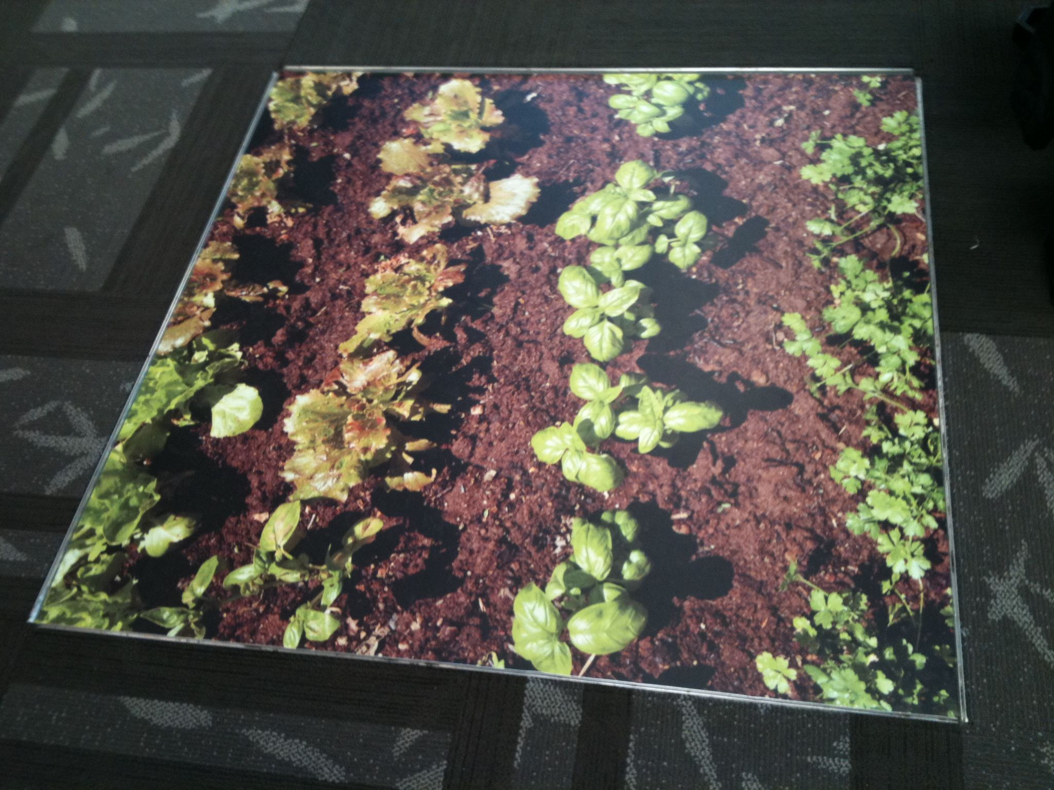 Spring time floor graphic!  Full-color printed vinyl with non-skid laminate.
