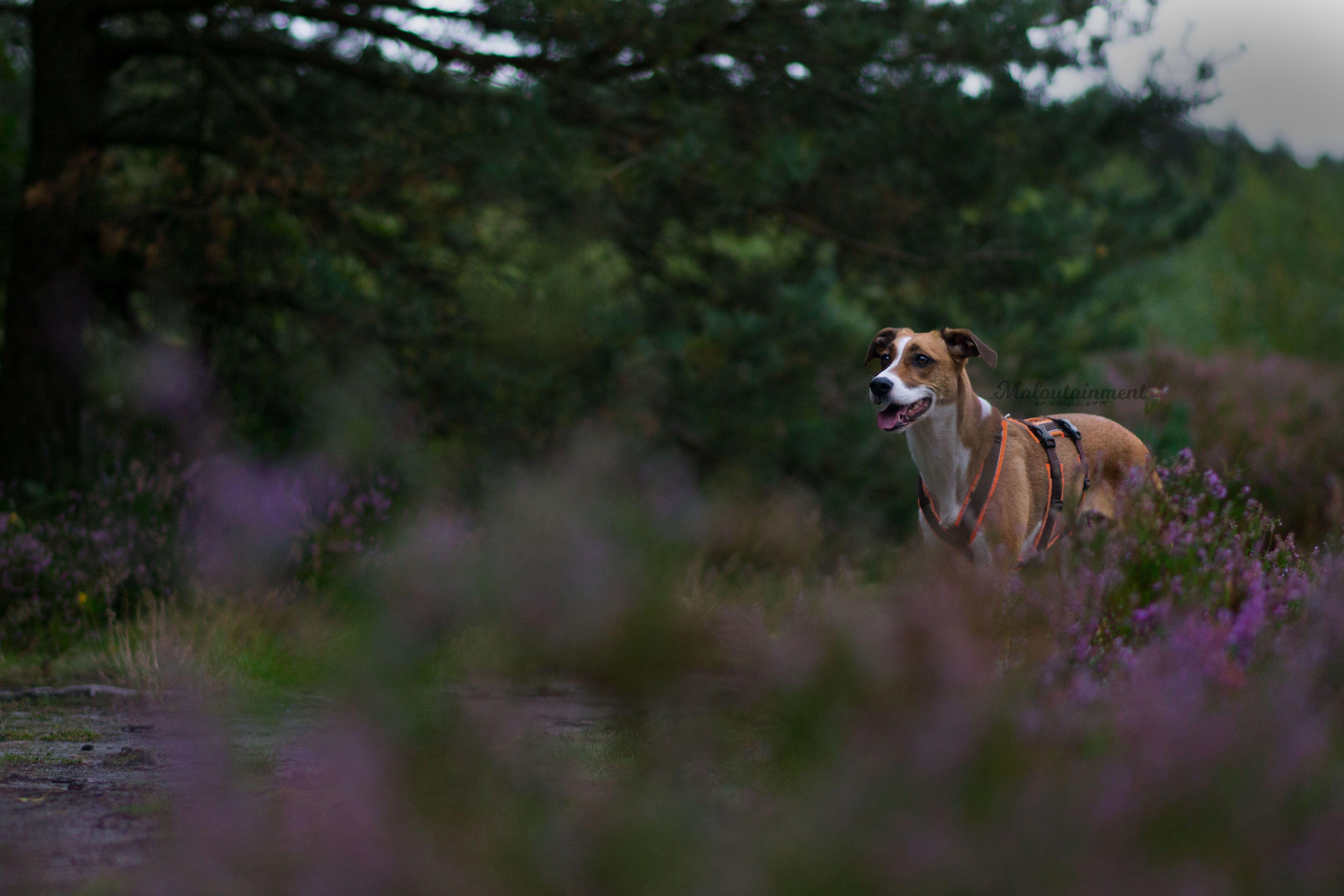 Ein Bild Aus Einem Meiner Shootings Maria Maloutainment Pferd Hund Katze Fische Aquarium Tier Animal Pet Horse Ca Bilder Fotografie Tiere