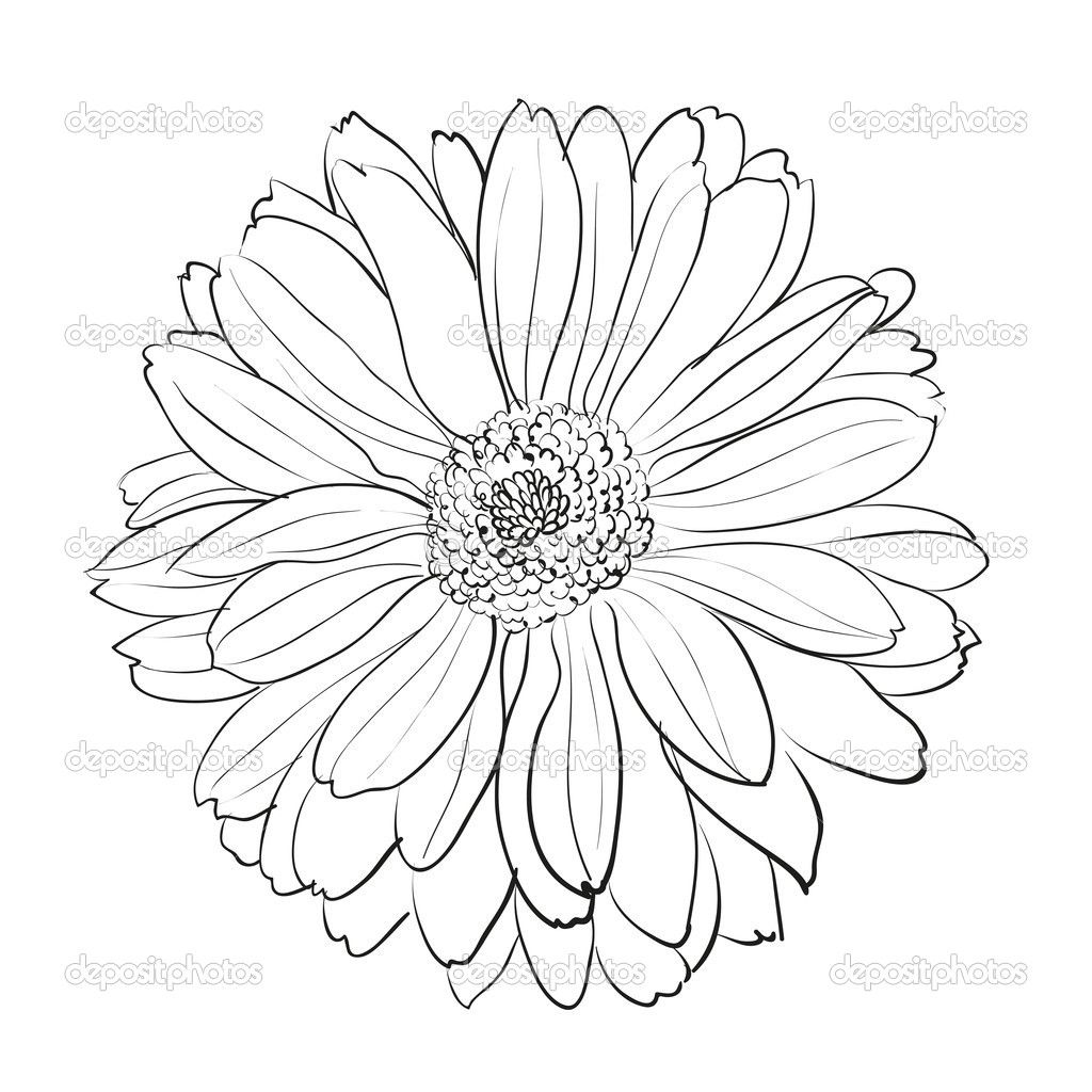 Gerbera Daisy Coloring Page Vozeli Com