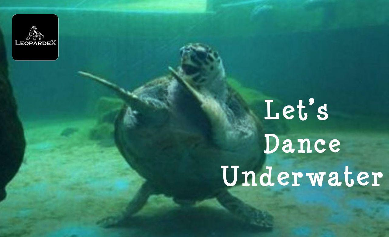 That Moment When A Turtle Dances Better Than You Leopardex Underwaterfun Underwaterdance Havefun Dancing Underwater Fun Fish Pet Underwater