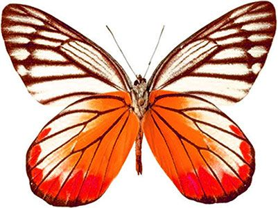 free animated butterfly clipart butterfly gifs graphics rh pinterest com free animated monarch butterfly clipart Moving Animated Butterflies