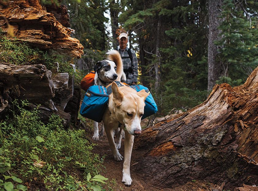 If you enjoy hiking or walking on trails with your pups, check out ...