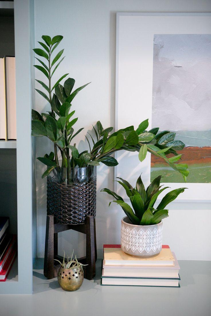 Silverspur planter in 2020   Plant decor, House plants ...