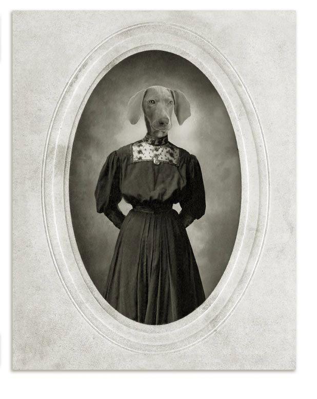 Emma the Weimaraner by jhovenstine on Etsy