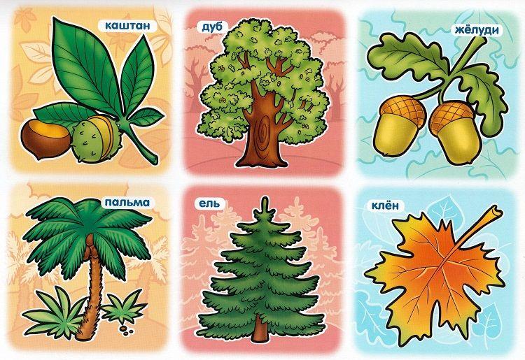 Разрезная картинка дерева