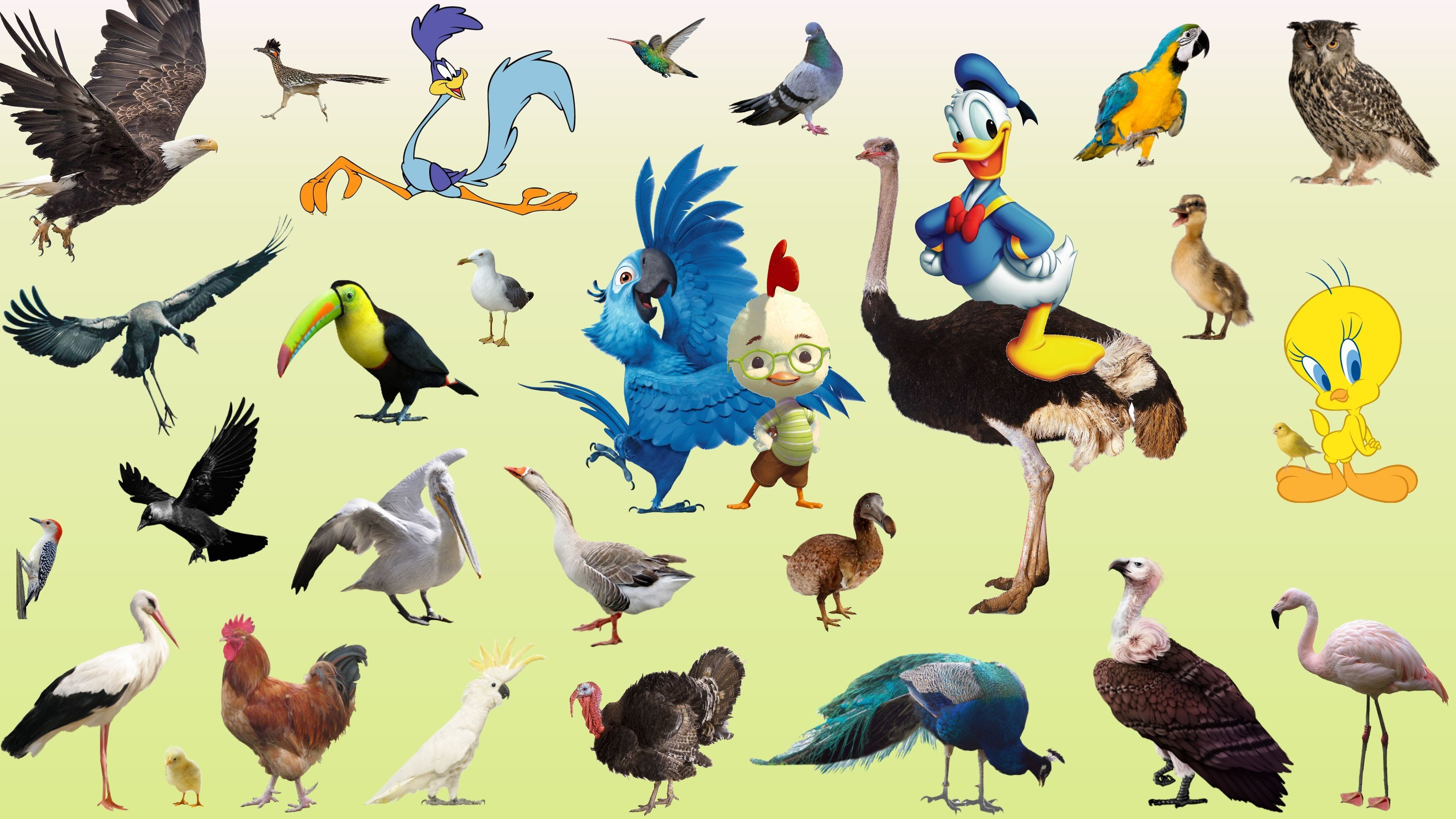 Learning birds names and sounds for children Real and