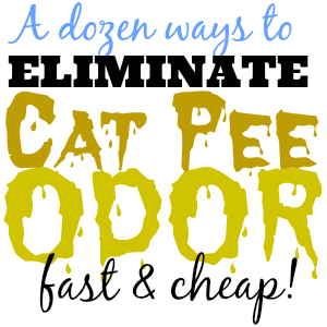 Don T Panic You Can Actually Get Rid Of Cat Pee Odor