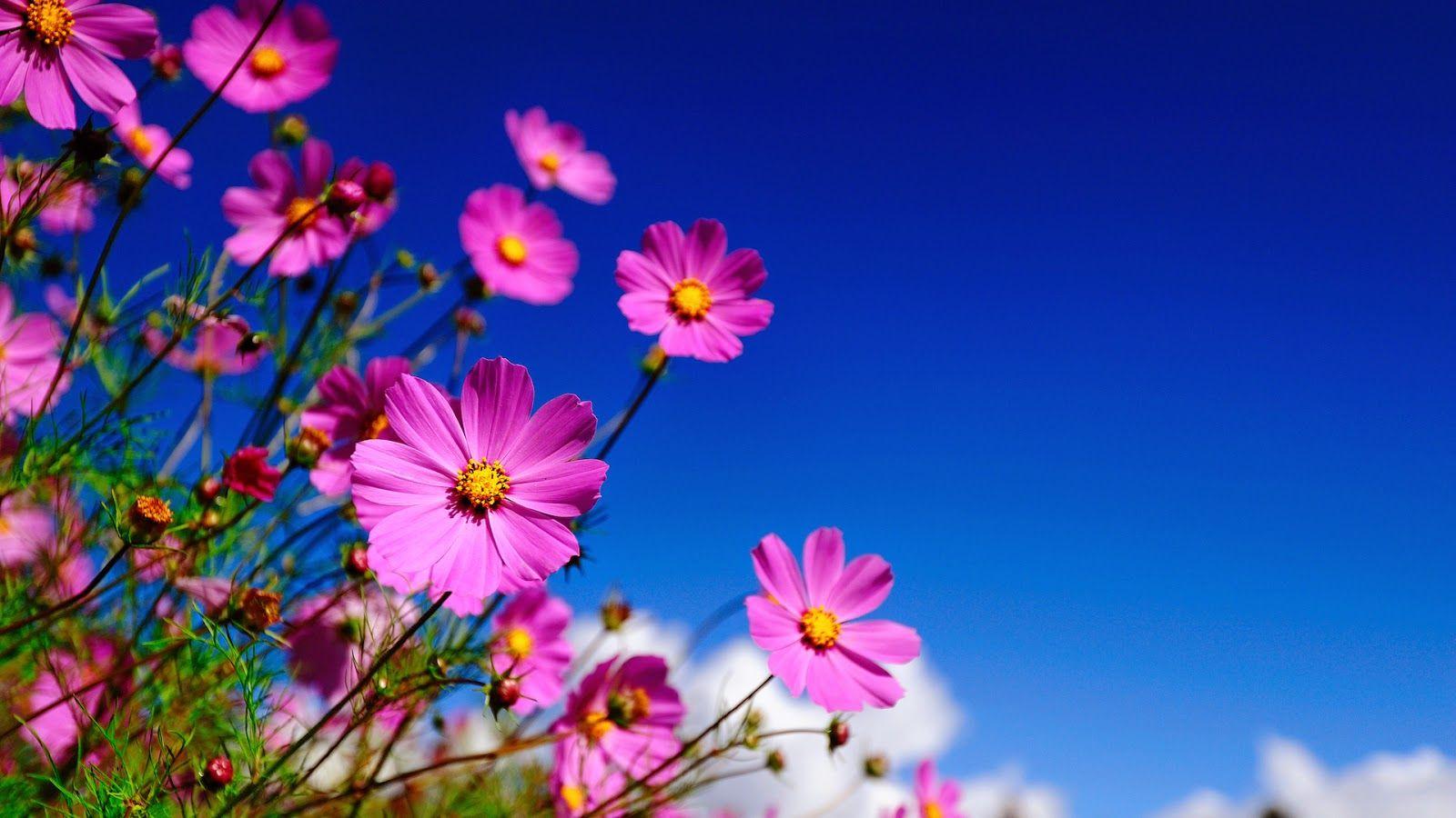 10 Delightful Flowers Wallpaper Desktop Background Full Screen Imagens De Bom Dia Fotos De Bom Dia Bom Dia Wallpaper