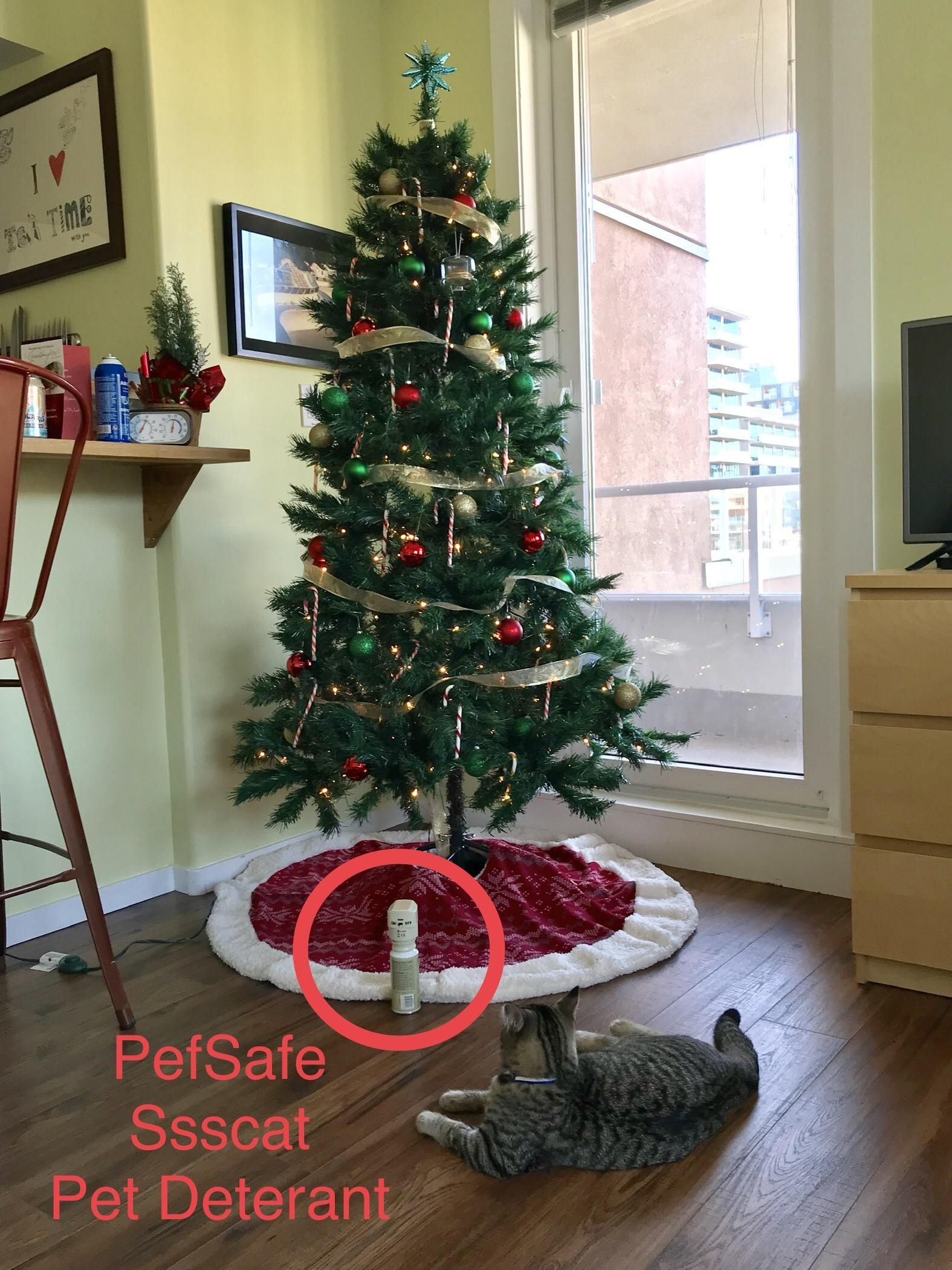Hope to keep cats away from Christmas trees here kitty