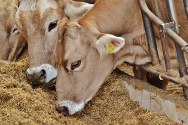 #eu #landwitschaft #milchbauern #milch #milchpreis #agrarhilfen #hilfspaket