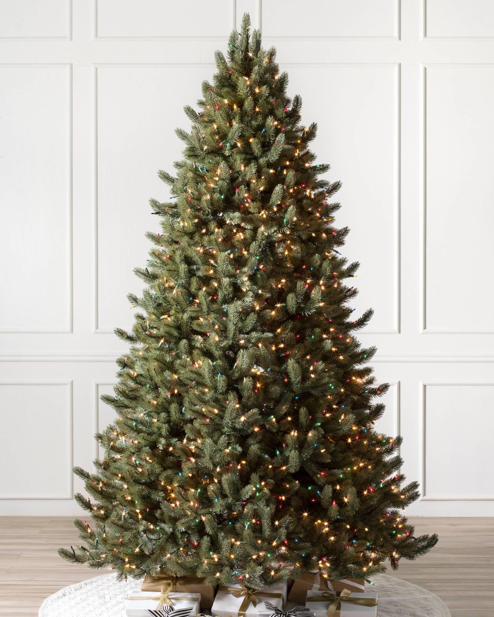 Vermont White Spruce Span Holidays Fir