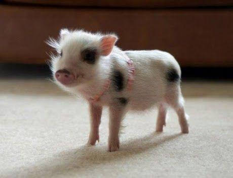 Cute Animals (35 Pics)