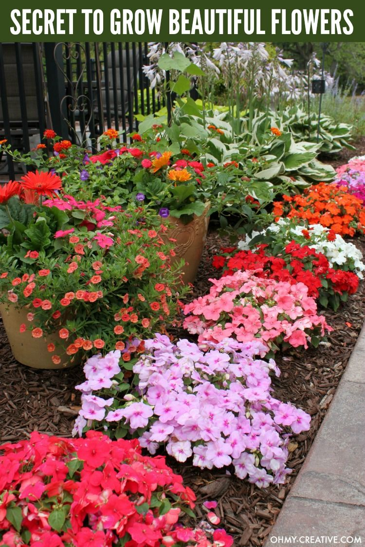 How to grow beautiful flowers plants flowers and beautiful flowers