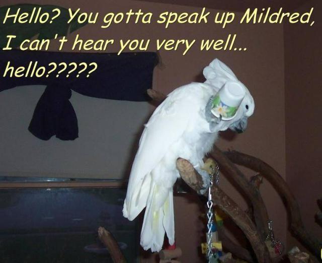 Fresh Entertainment Hobbies Sports And Humor Parrot Pet Parrot Bird